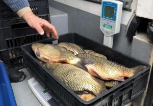 Във връзка с празника Никулден, Изпълнителна агенция по рибарство и
