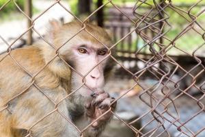 Тази събота (08.12.2018 г.) организацията за защита на животните КАЖИ