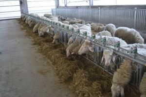 Снимка: Модерна овцеферма без аналог у нас е изградена със средства от ПРСР
