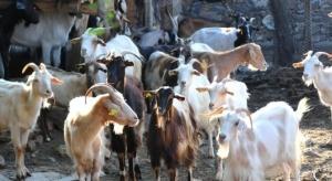 """Държавен фонд """"Земеделие"""" продължи с изплащането на финансовата подкрепа на"""
