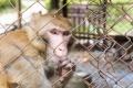 Инициатива срещу животни в клетки представят в столицата
