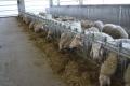 Модерна овцеферма без аналог у нас е изградена със средства от ПРСР
