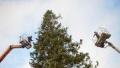 Москва подари 13-метрова елха на София