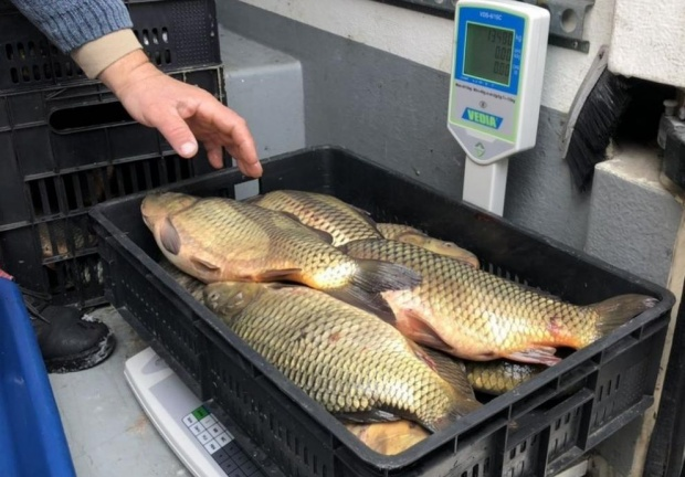 Над 440 проверки извърши Агенцията по рибарство преди Никуден
