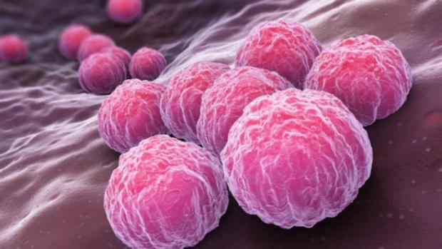 Шведски учени създадоха имунни клетки от кожа в борбата с рака