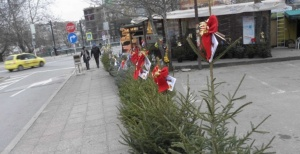 След като бъде свалена новогодишната украса от празнични естествени елхи