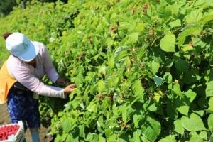 След брекзит българските сезонни работници ще се сблъскат с нови