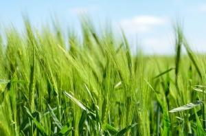 Снимка: Комисията увеличава националните помощи за земеделските стопани до 25 000 EUR