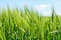 Комисията увеличава националните помощи за земеделските стопани до 25 000 EUR
