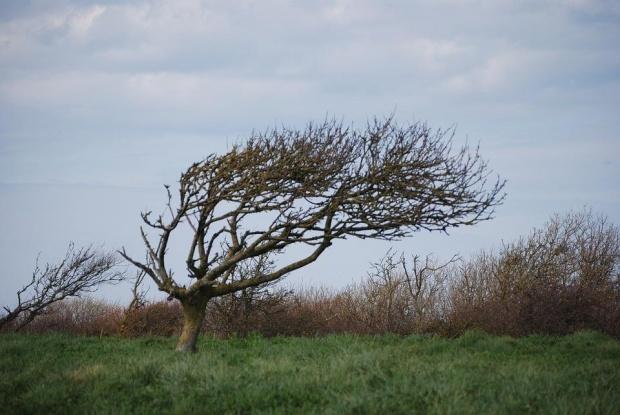 Бурни ветрове във вторник в почти цялата страна