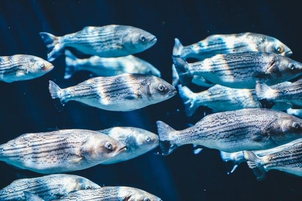 Огромни количества мъртва риба по бреговете на Чили