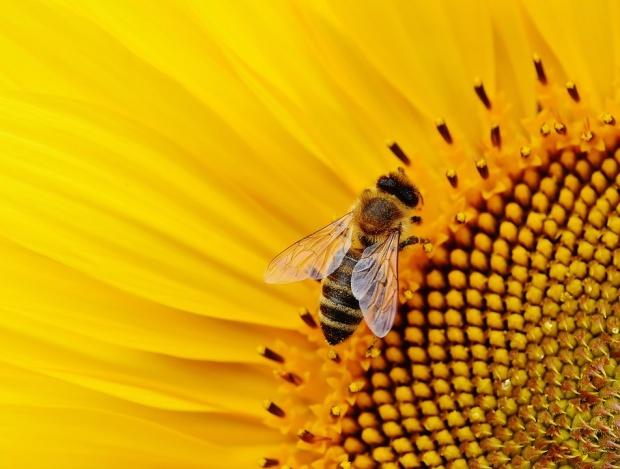 ООН: Загубата на биоразнообразие – тежка заплаха за изхранването по света