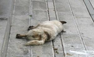 7 месеца условна присъда заради жестокост към животно. Това е