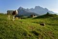 Австрия затяга мерките за туристи, след като крава уби планинар