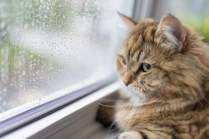 Снимка: Изненада: За котките не е полезно да излизат навън