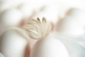 Средната цена на дребно на яйцата през миналата седмица достигна