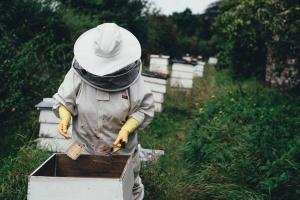 Пчелари от плевенските села Биволаре и Божурица се оплакаха, че