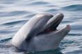 Глобалното затопляне силно застрашава делфините