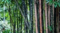 Земята е загубила 12 милиона хектара тропически гори през 2018 година