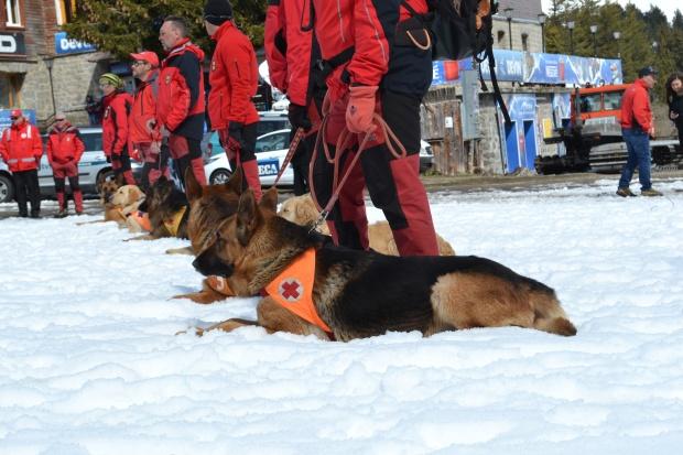БЧК - 45 г работа със спасителни кучета