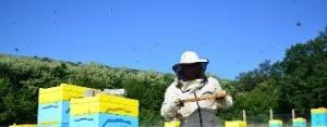 Днес изтича крайният срок, в който пчеларите трябва да внесат