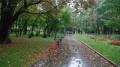 Дъждовно свършва работната седмицата