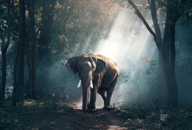 Зимбабве е продала близо 100 слона на Китай и Дубай за 2,7 млн. долара