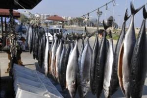 Рибарите в Царево и Ахтопол са втрещени от невиждано по