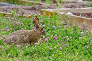 70 диви зайци бяха пуснати на свобода в района на