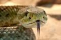 Няма отровни змии в градските паркове у нас