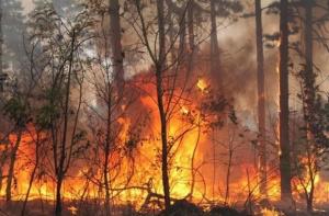 Снимка: Пожар бошува и в Португалия