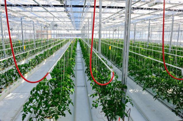 Домашна оранжерия с канабис открита край Пазарджик