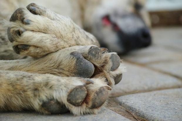 Кастрират бездомните кучета и котки в Кюстендил