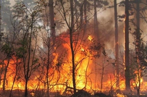 Пожар бошува и в Португалия