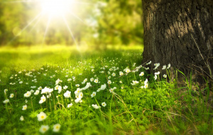 Oт 2017 г. зaeднo c дeцaтa и учeницитe зacaждaмe дървeтa