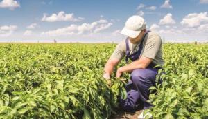 Общо 22 млн. евро ще получат млади фермери за стартиране