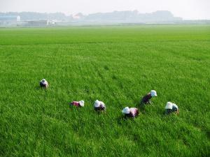 """Държавен фонд """"Земеделие"""" е финансирал 880 проекта, подадени през подмярка"""