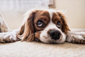 На 26-ти август отбелязвамеСветовния ден на кучето. На този ден