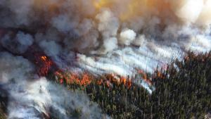 Стотици нови пожари са избухнали в Амазония, на територията на