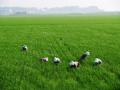 43 млн. лева са разпределени за подпомагане на младите фермери