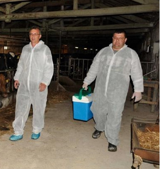 КНСБ: Да се вдигнат заплатите на специалистите, борещи се с африканската чума по свинете