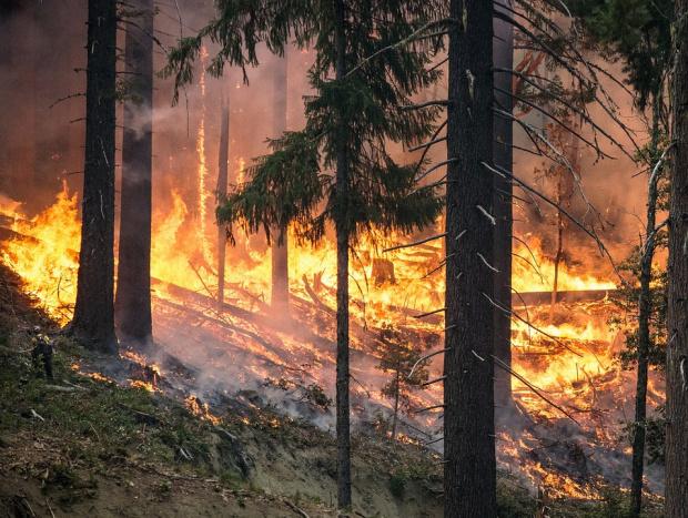Над 60 огнеборци гасят пожар в гръцкия курорт Ксилокастро