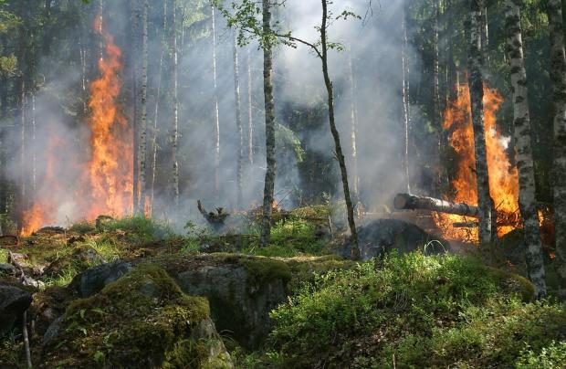 Горски пожар бушува и на остров Тасос