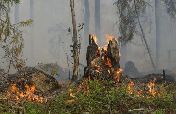 В Хасковско горят 8000 декара, половината са гори