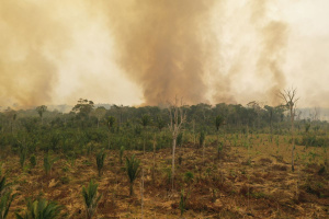 Общата площ наунищожените от пламъцитегори в Амазония през 2019 г.,възлиза