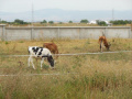 До 31 октомври 2019 г. фермерите доказват реализираното мляко и животни
