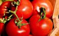Земеделци: Вносът на зеленчуци ни убива, държавата да го забрани или да вдигне субсидиите