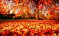 Астрономическата есен идва днес, през деня няма да има валежи