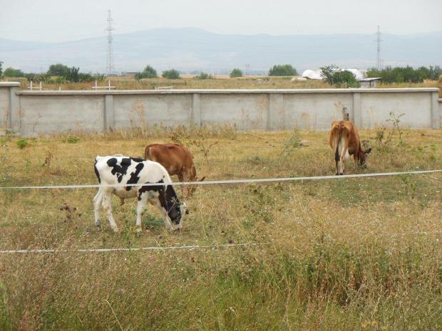 От 7 до 31 октомври 2019 г. животновъдите, които са