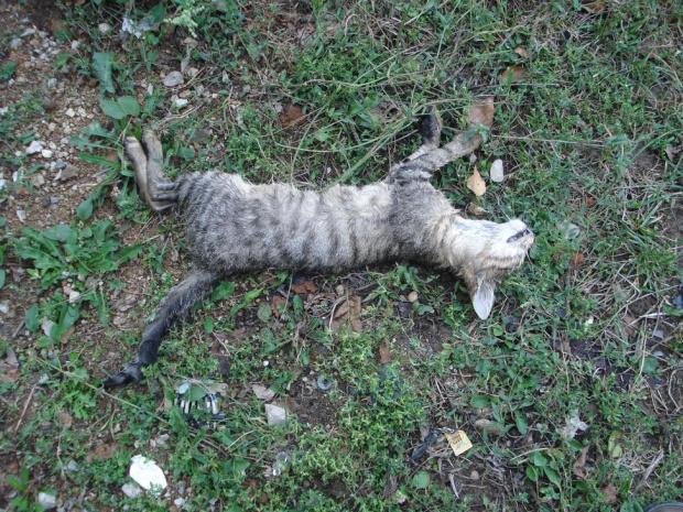 Пловдивчанин е с повдигнато обвинение за проявена жестокост към гръбначно